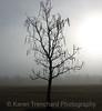 Sad Catalpa Tree