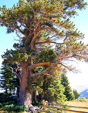 Todd's Tree