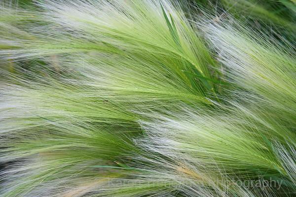 Silky Barley Lime & White