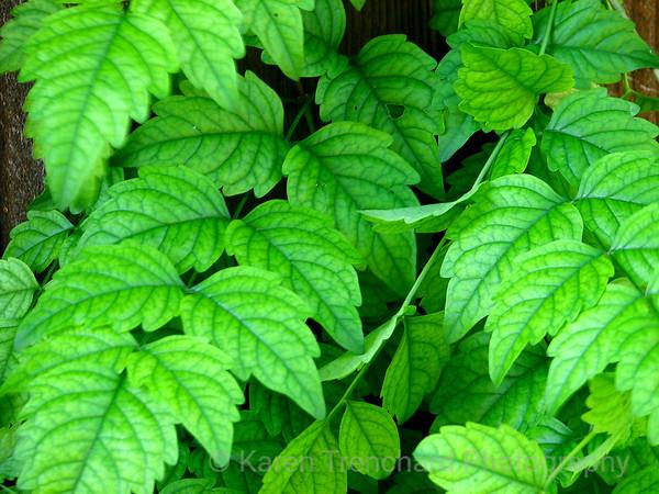 Vibrant Green Leaves Shrub