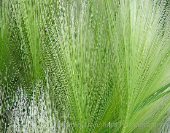 Trees-Shrubs-Grasses