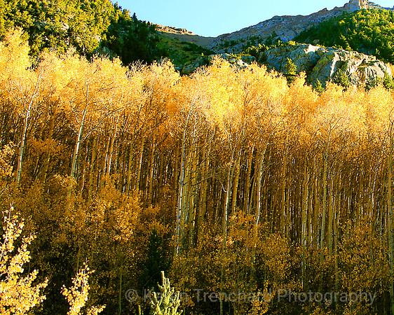 Gilded Misquito Pass, Colorado