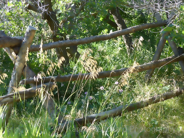 Tall Grass and Fence