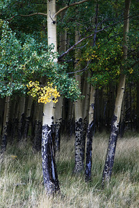 aspens 2 valle vidal new mexico
