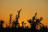 Assateague Island, August 2008- 1 of 11...