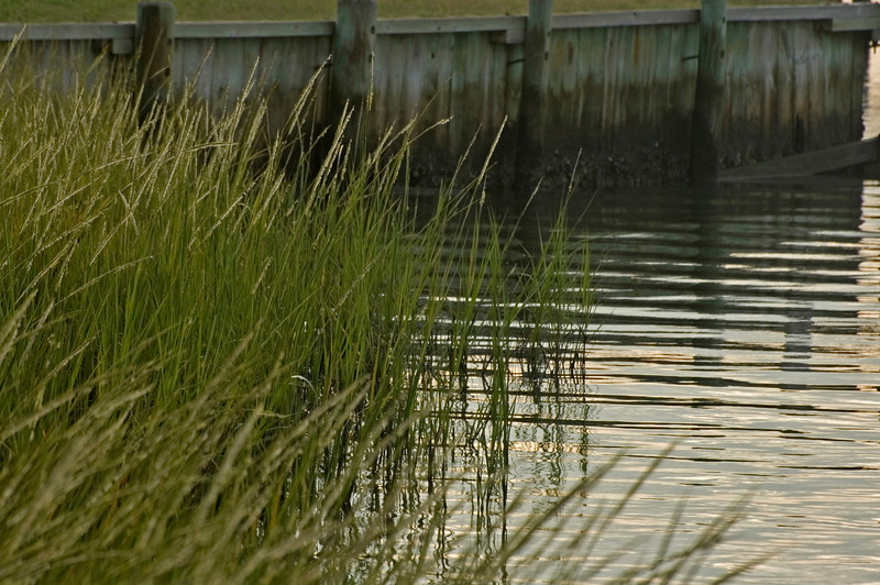 Marsh Grass growing along Oyster encrusted sea wall.