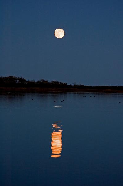 Full Moon illuminating resting Ducks.