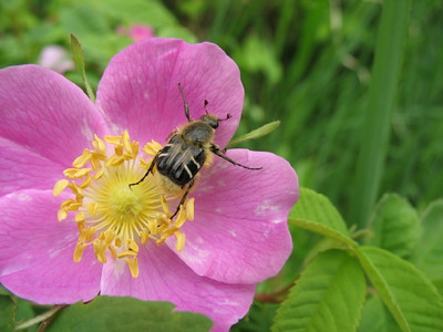 Not yet identified bug found at Clearwater Lake.