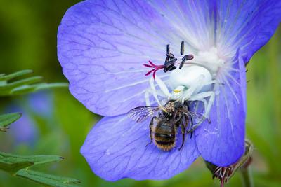 Garden: Spider vs bee