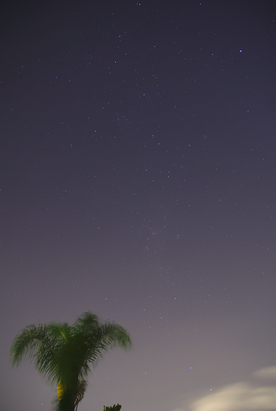 The Southern Cross and a palm tree, the view from my garden in Sydney on 2013-03-16.<br /> <br /> Sony A100 DSLR with Tamron 17-50/2.8, 30 s, f/2.8, 17 mm, ISO 400.