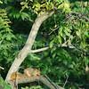 Squirrel 024