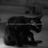 black cat-bw