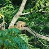 Squirrel 046