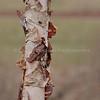 Paper Tree 1 1