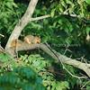 Squirrel 043
