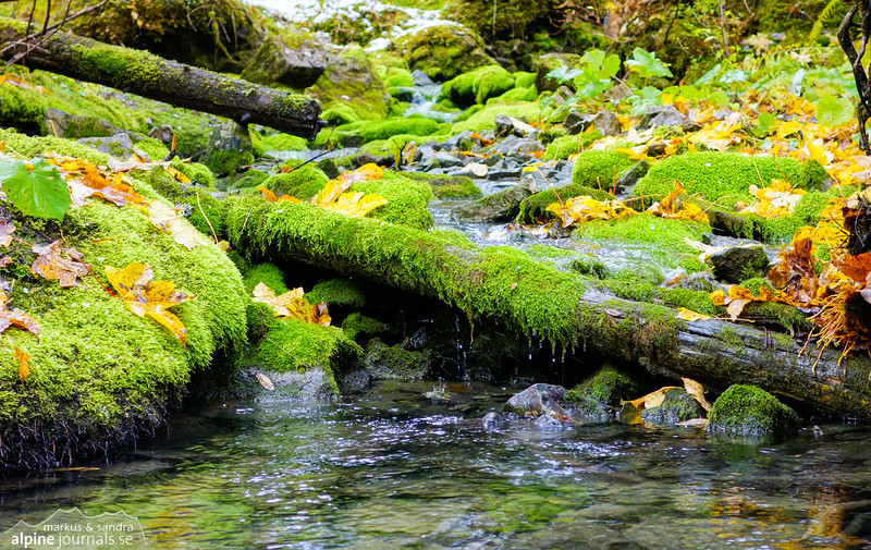 Dripping moss