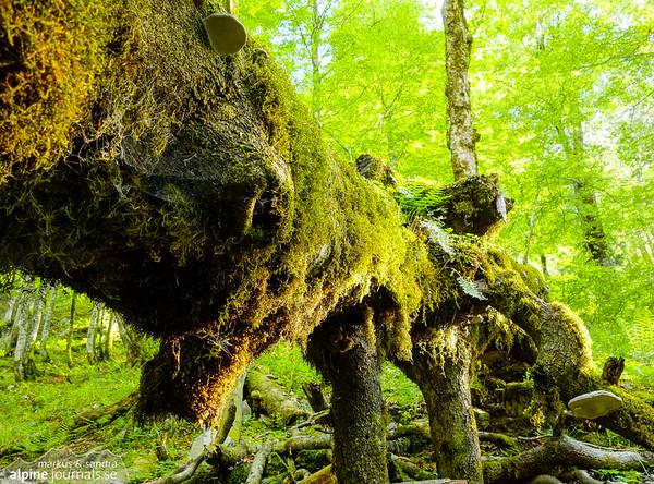 Old log's rest