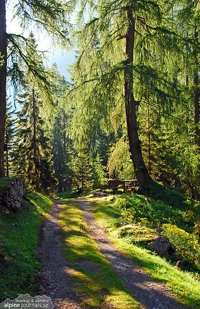 Karwendel forest