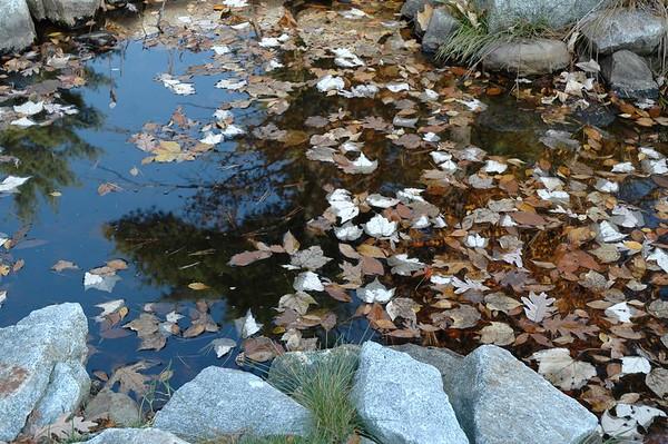 Auburn Fall