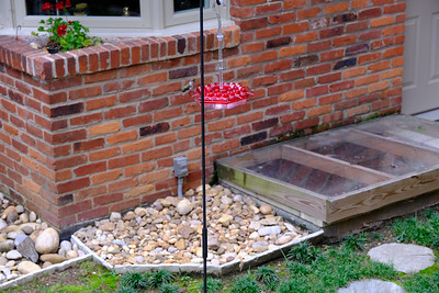 Ruby Throated Hummingbird - September 2020