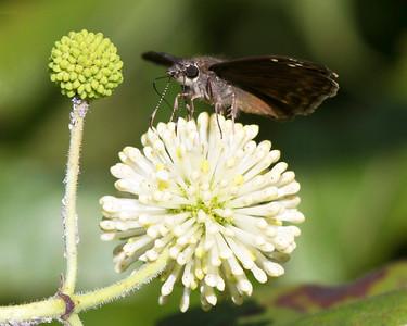 Back in the Nature Center Garden.  A strange moth on a strange plant.