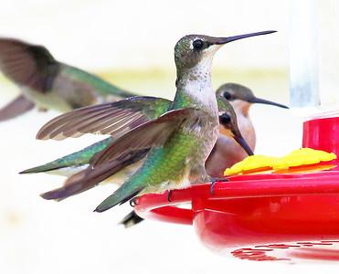 Four birds converge on one corner of a feeder.