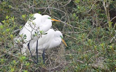 Audubon Swamp Gdn 2012