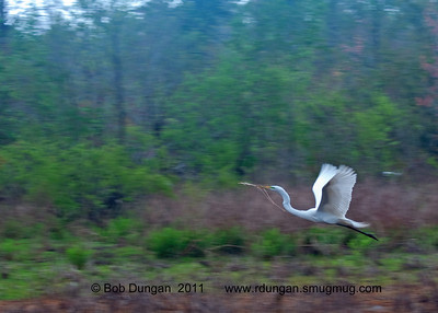 Audubon Swamp Garden Mar 2011
