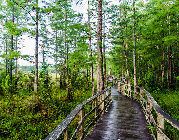 Audubon's Corkscrew Swamp Sanctuary