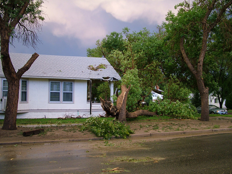 Big tree smashes a house. Seems like the house did a good job of withstanding that tree.