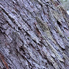 Bark texture in the forest