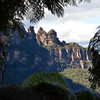 The Three Sisters.as seen from the temperate rain forest on the slopes leading down to the Jamison Valley.