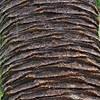 Bark Texture, Botanical Garden in the Royal Botanical Gardens in Sydney (3)