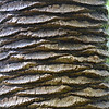 Bark Texture, Botanical Garden in the Royal Botanical Gardens in Sydney (2)