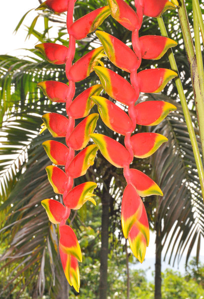 The first sights that greet the new guest at the lodge are the bright tropical plants and flowers.