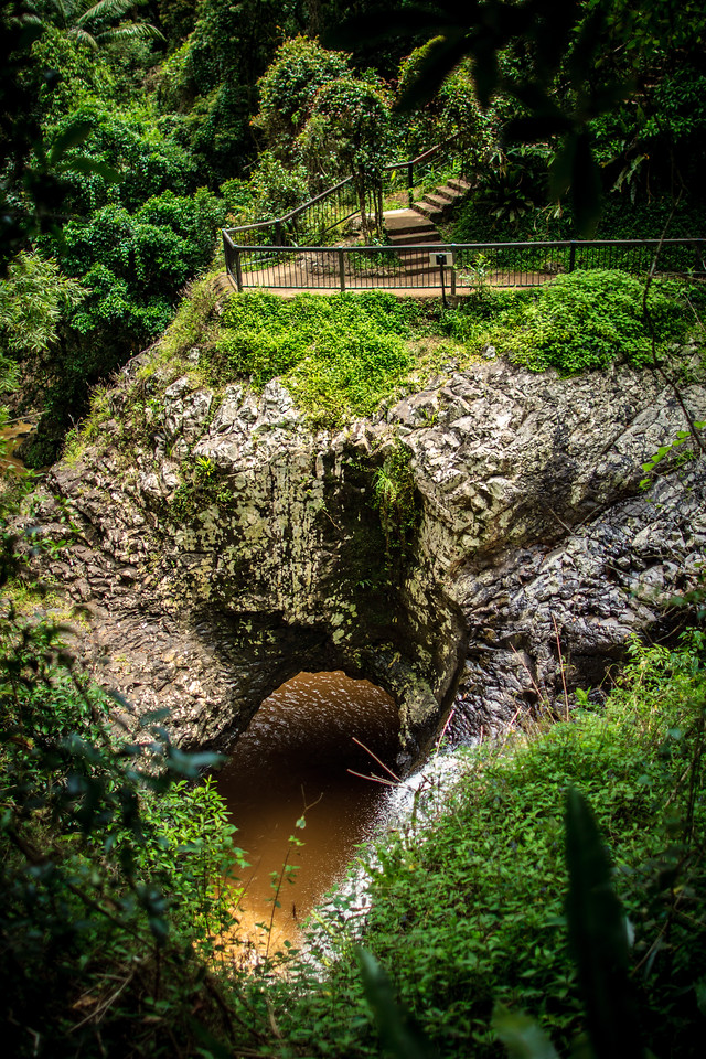 Springbrook National Park, QLD, Australia