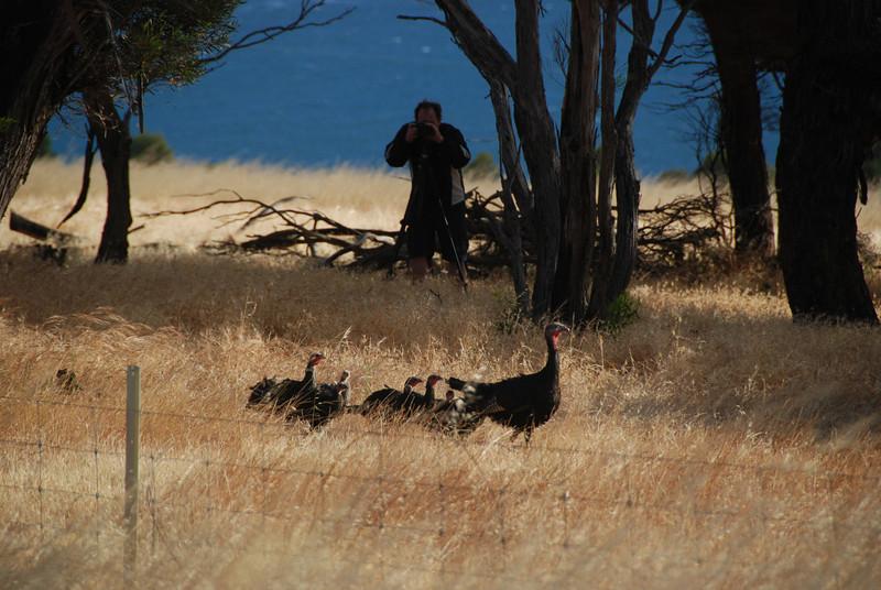 Scott photographing wild turkeys