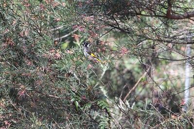 Some pretty little Aussie bird...