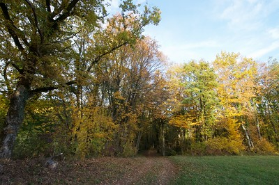automn leaves