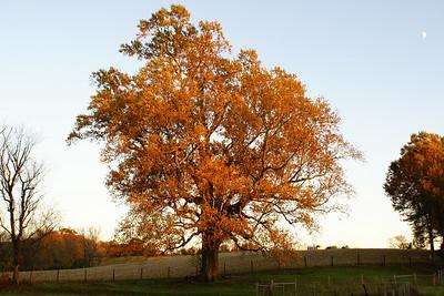 Autumn - 2006