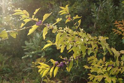 Autumn, 2012
