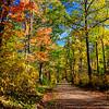 Autumn Roads - Road to Frank Lake