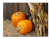 An October Display - Pumpkins and Cornstalks (86857808)