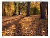 Autumn Leaves (51892191)