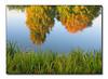 Autumn Reflections (88098444)
