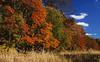 Autumn-110sm