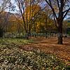 Yoyogi Park, Tokyo, in Autumn