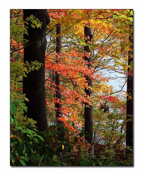 October Woods (69835612)