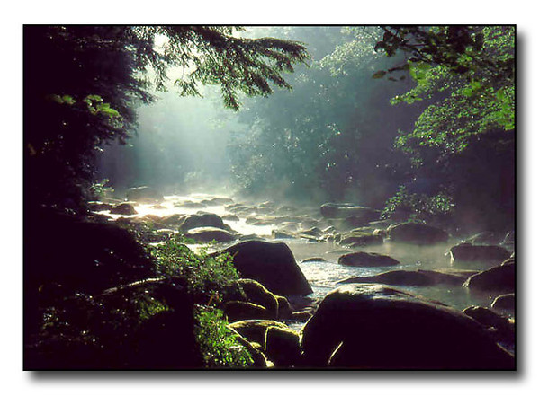 Misty Morning-w1 (35191790)