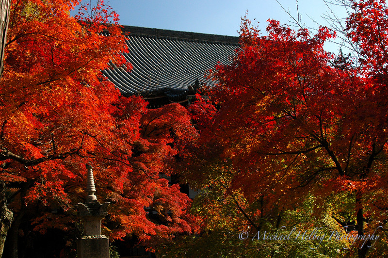 Momiji: Maple leaves - Kyoto